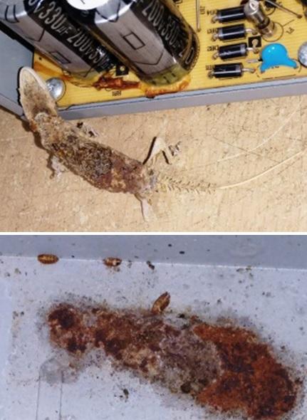lizard in power supply