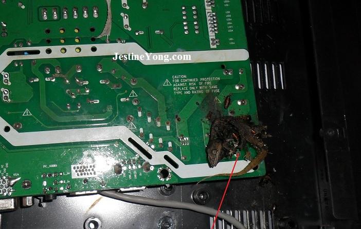 dead lizard in pcb board