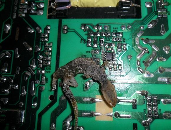 dead lizard in pcb